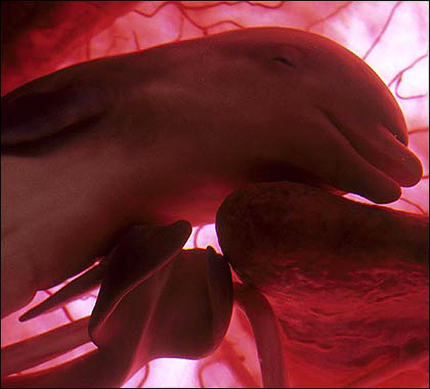 animals in the womb - photo #12