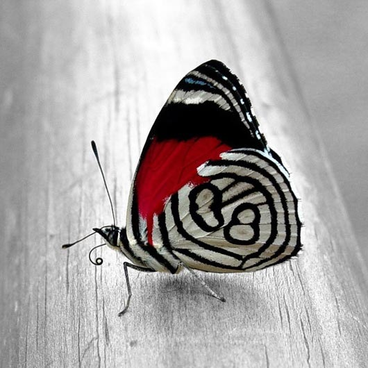 Black butterfly iPad wallpaper Love Symbol
