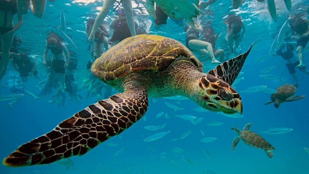Hawksbill Turtle 1024x576 Underwater Animals