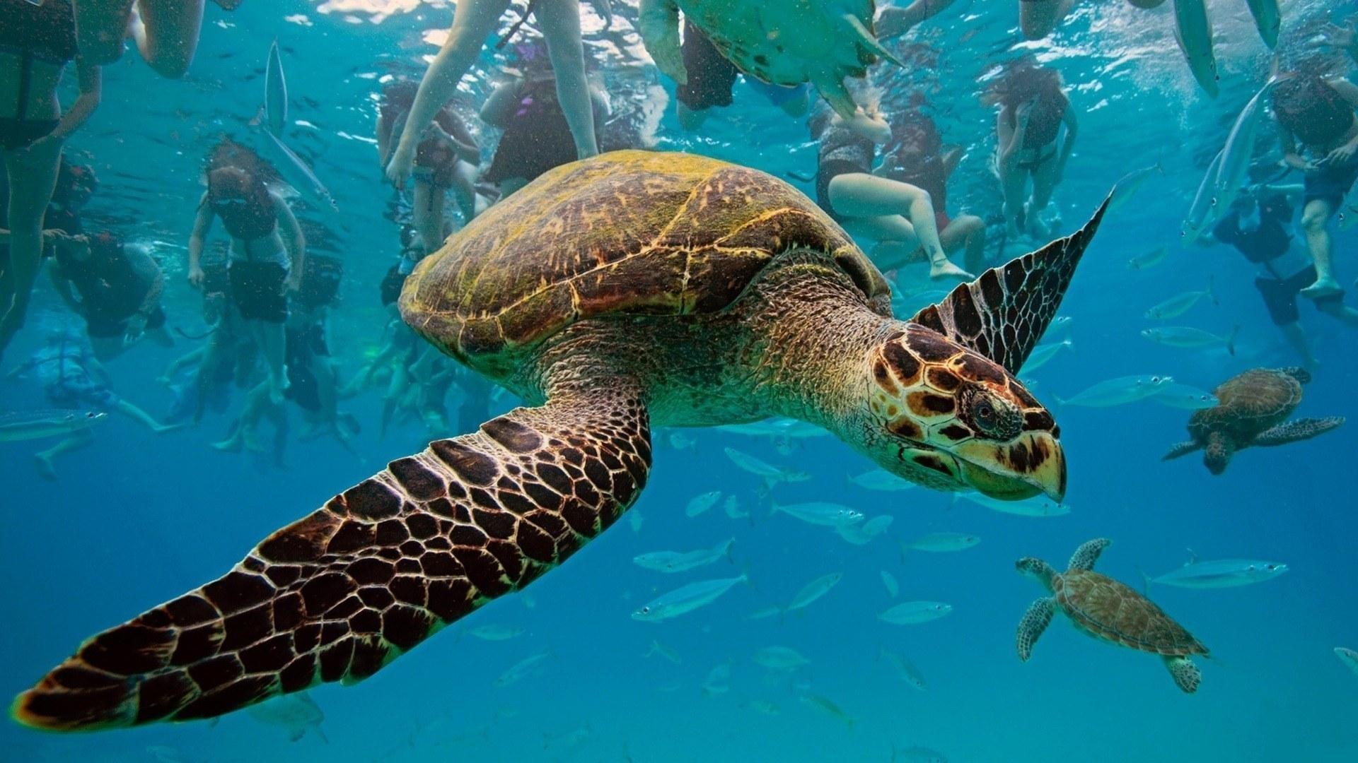 Underwater animals sharkpictures collections