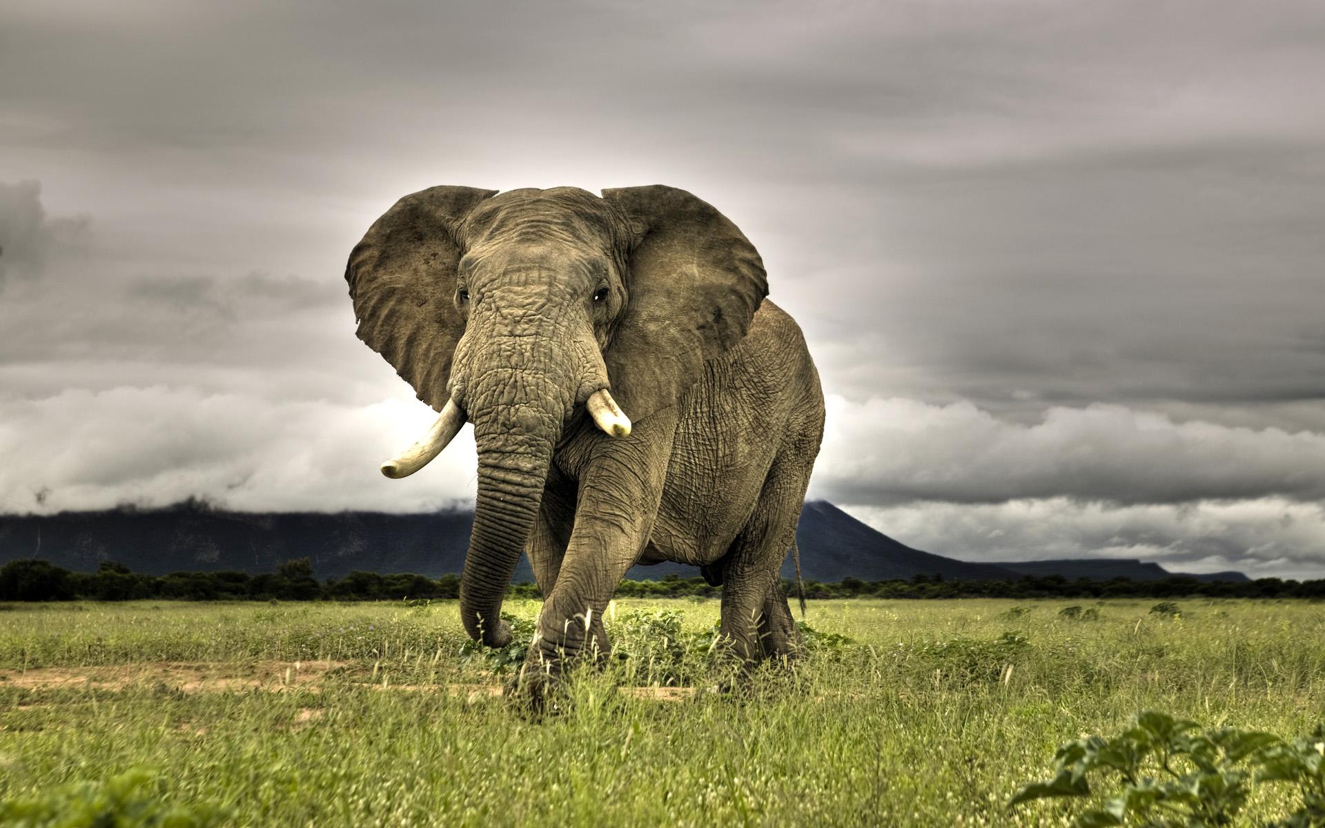 elephants wallpapers world - photo #5