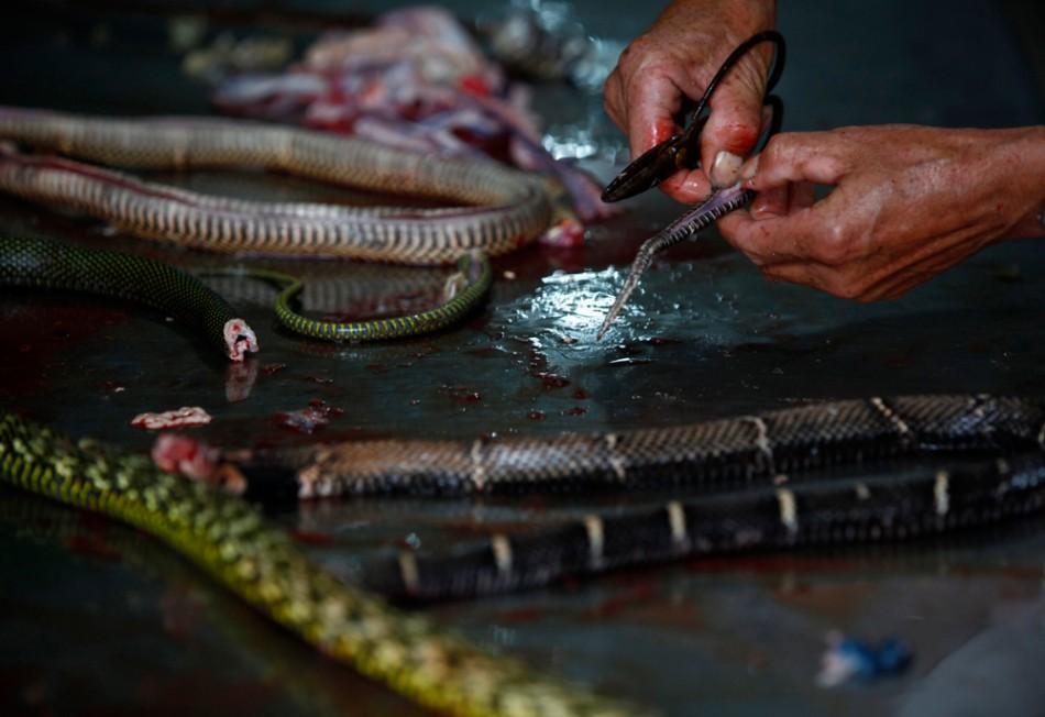 China_Snake_Food_Preparation | inspiration photos