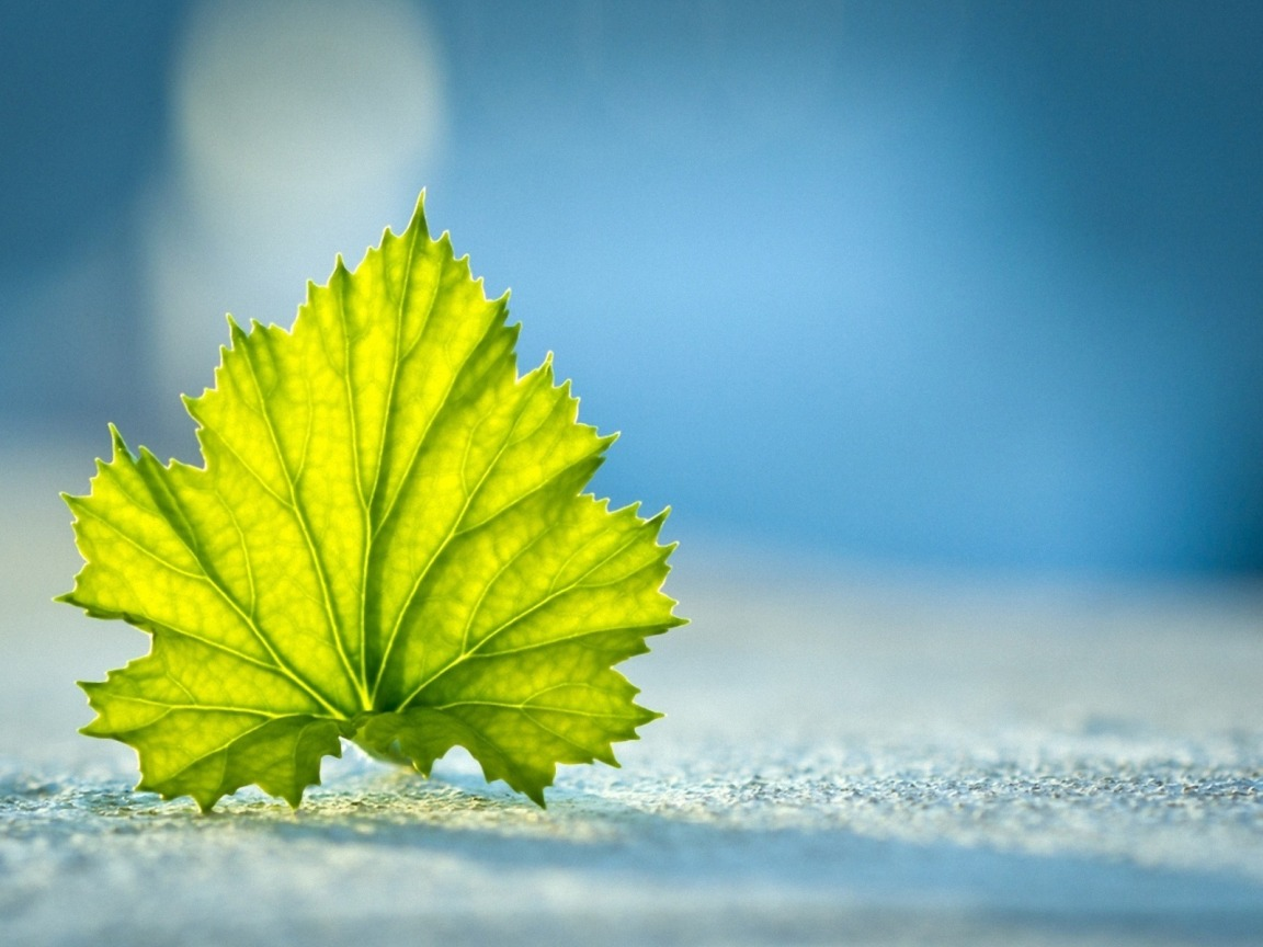 beautiful leaf Leaf Photography