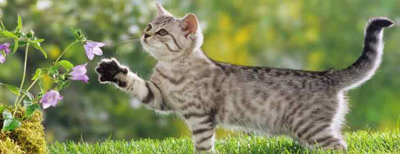 cute cat facebook photos Timeline Cover Photos