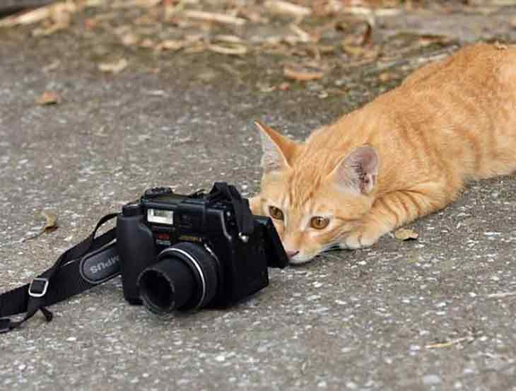 Animals With Cameras  08 Animals and Camera