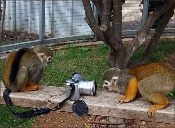 Baby Monkey Animals and Camera