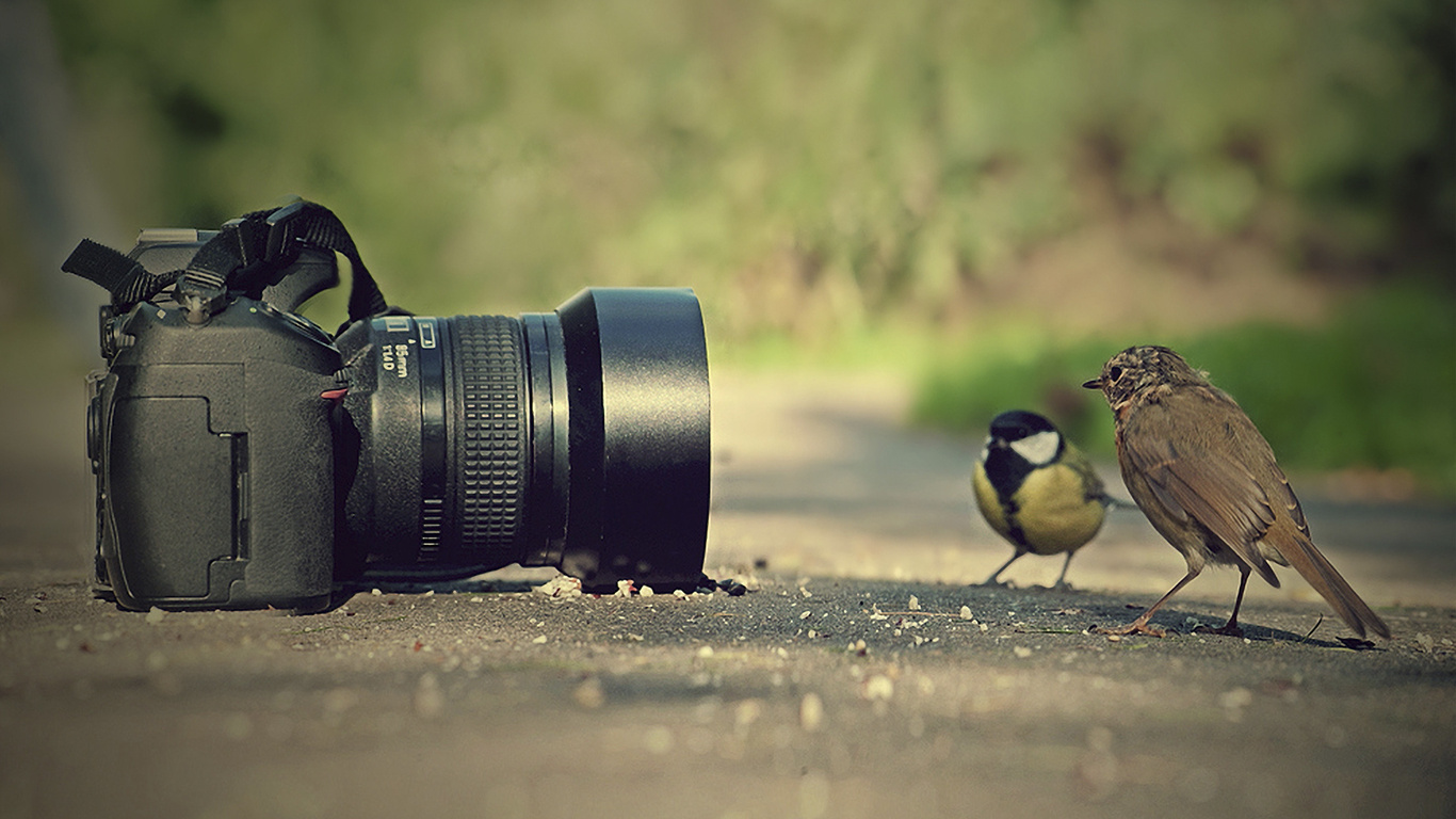 Birds Camera Animals and Camera