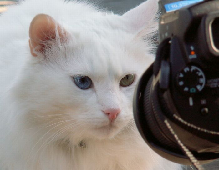 Cute Cat Animals and Camera