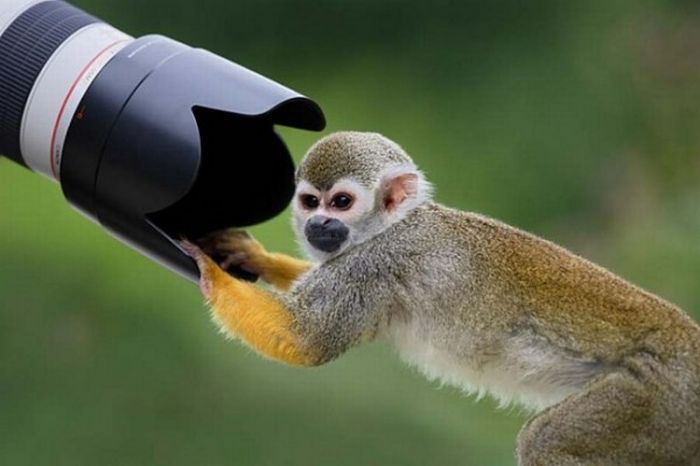 Cute Monkey Animals and Camera