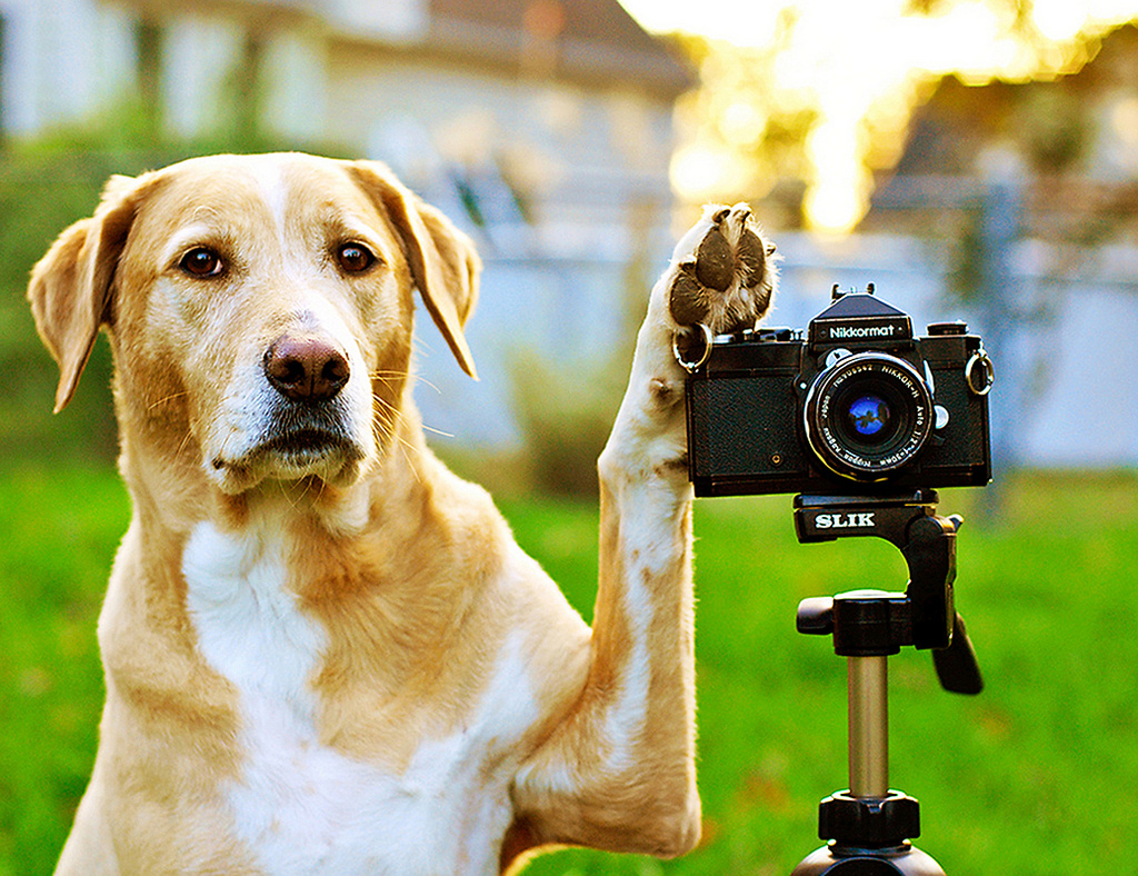 Dog Photographs Animals and Camera