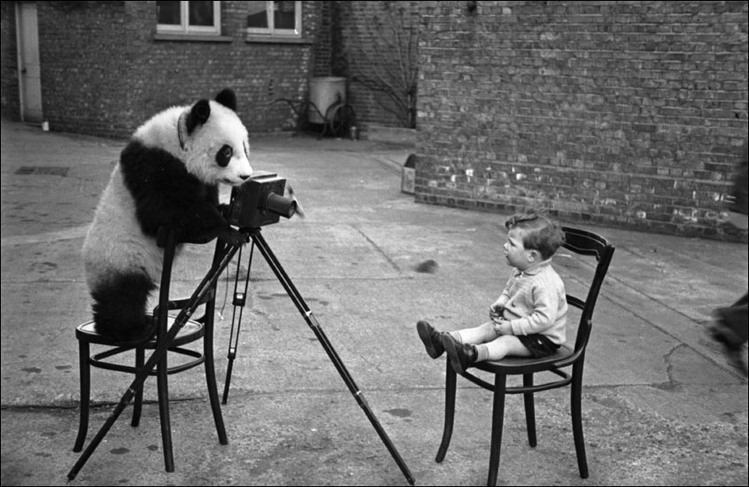 Ponda Animals and Camera