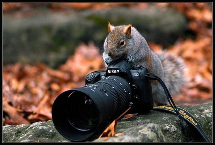 Squirrels Animals and Camera
