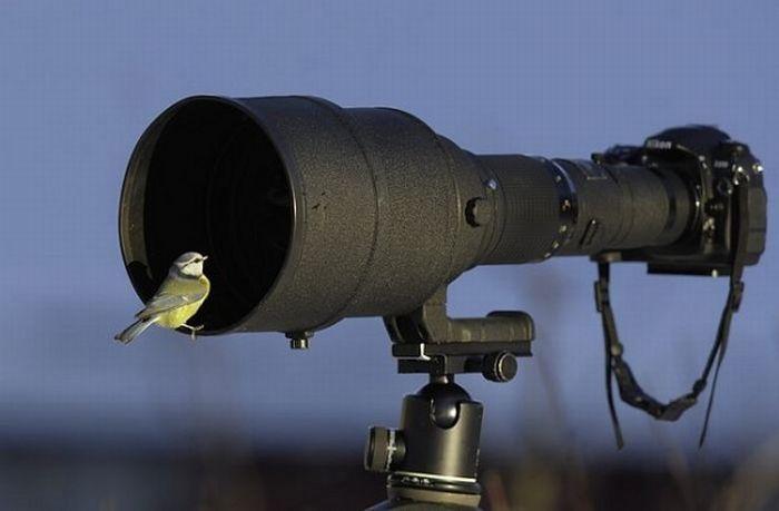birds Beautiful Animals and Camera